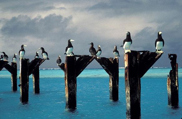 johnson-atoll