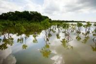 Destroyed Coastal Habitats Produce Significant Greenhouse Gas