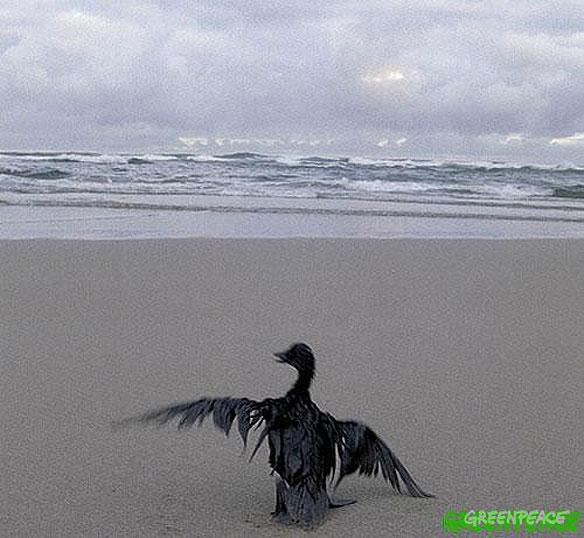 prestige-oil-spill-2003