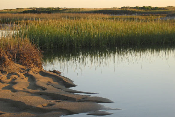Historic floods reveal how salt marshes can protect us