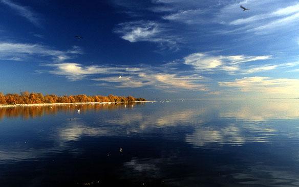 Salton Sea fingered as culprit of big California stink