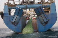 Fish Trawling Unexpected Impacts