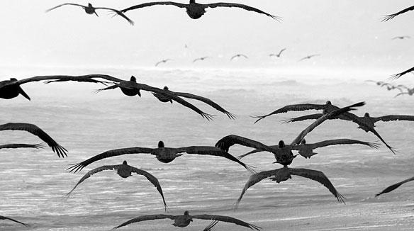 Wings Of Waste Flight: Using Plastics For Fuel