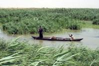 Marshes of Mesopotamia