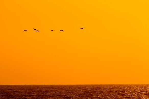 birds-orange