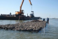 oyster-reef-conservation
