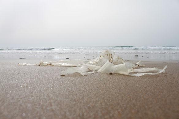 South Texas Artist Makes Plastic Pollution Her Medium