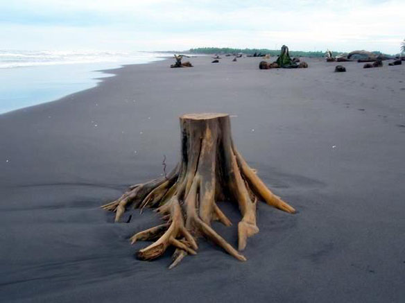 Human Deforestation Outweighs Climate Change for Coral Reefs