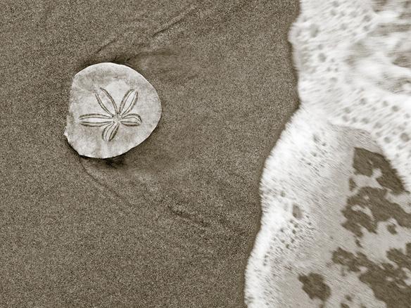 Does Economic Valuation Really Influence Coastal Policy?