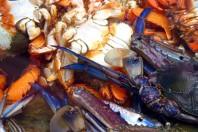 US closes shrimping near oil spill as precaution