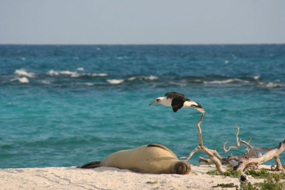 Research Underscores Vulnerability of Wildlife in Low-Lying Hawaiian Islands
