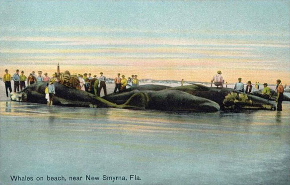 whales-florida