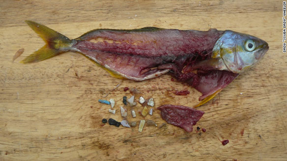 plastic-debris-in-fish