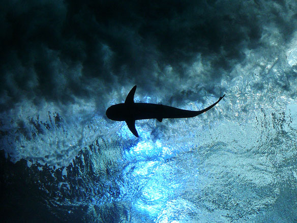How Should We Respond When Humans and Sharks Collide?
