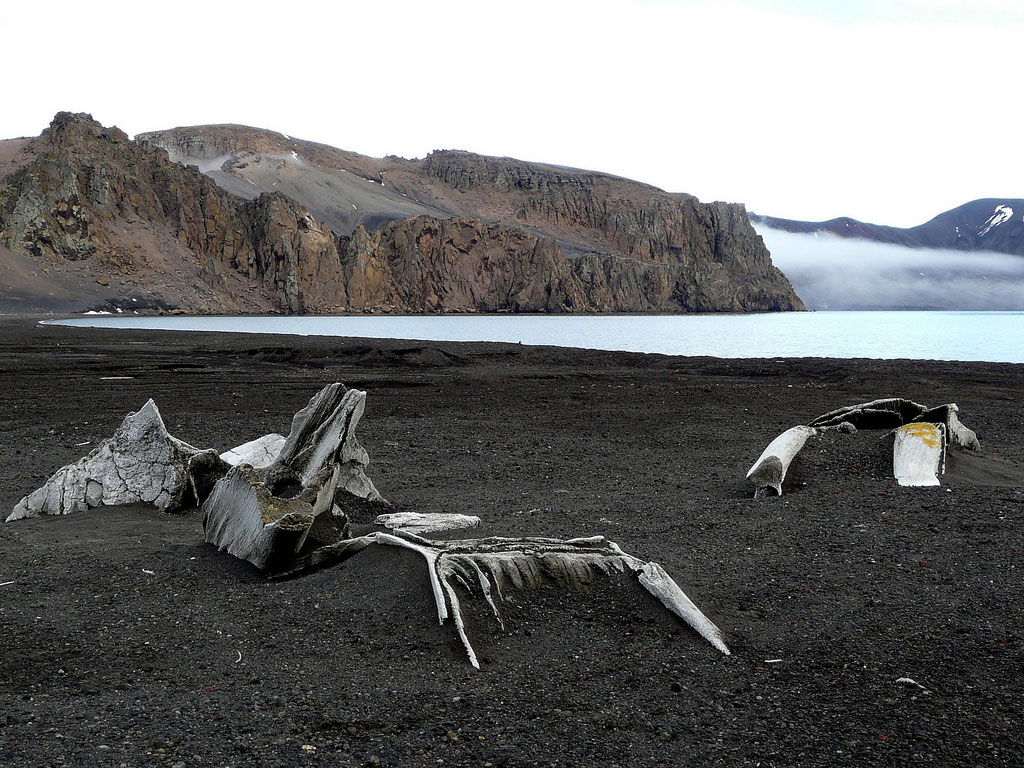 Antarctic's First-Ever Whale Skeleton Found