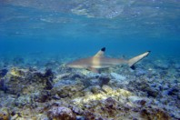 Fifty years of decline in Queensland's coastal sharks