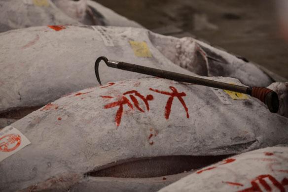 japan-fish-hook