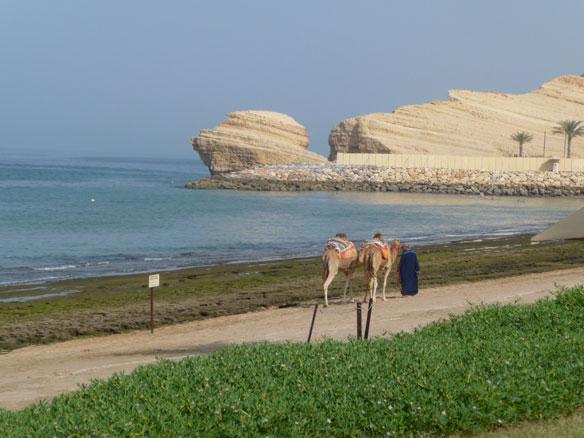 Archaeologists Reveal the Vasco da Gama Shipwreck, Video