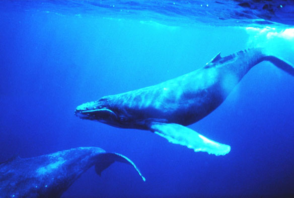 Whales Benefit From Action On Ocean Noise
