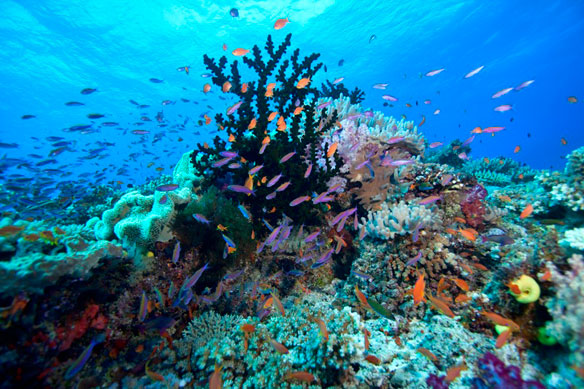 Particles From Fossil Fuels Affect The Growth Of Corals