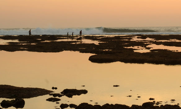 On Java's Coast, A Natural Approach to Holding Back the Waters