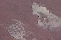 "State Allows ""Sand Mining"" On Plum Island Beach, MA"