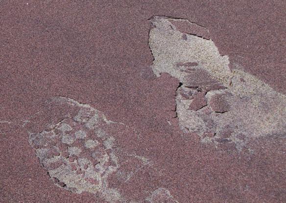 plum-island-sand