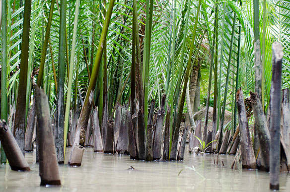 vietnam-mangrove