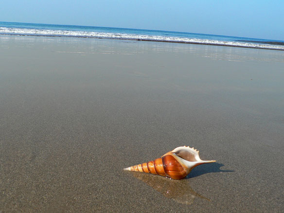 Why Do You 'Hear The Ocean' In a Seashell?