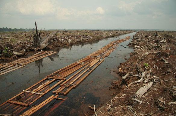 Riau-deforestation
