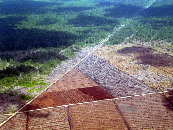 80 Percent of Malaysian Borneo Degraded by Logging