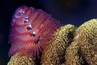 Can Soft Coral Save Our Oceans?