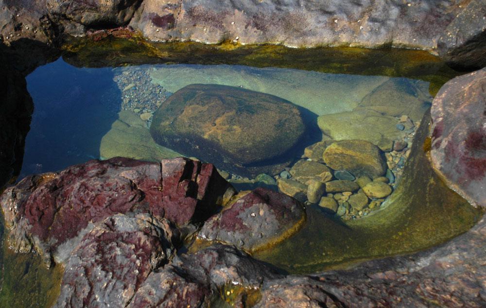 Tide pool, Monterey, California; By Marcelina Cavat