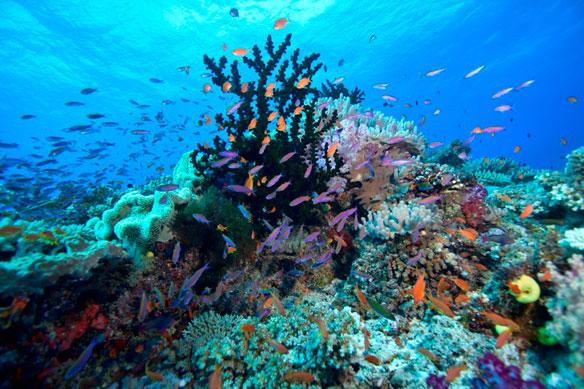Coral Reefs Dying In Virgin Islands
