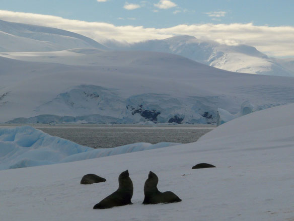 Antarctic Marine Reserve Threatened By Sunset Clause