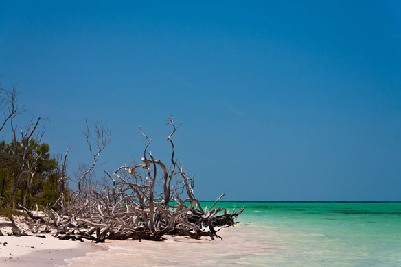 Cuba's Mangroves Dying of Thirst