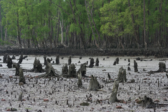 How Not to Love Nature: Shove a Coal Plant Next to Earth's Biggest Mangrove Forest