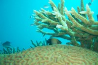 Close-Up Of Coral Bleaching Event