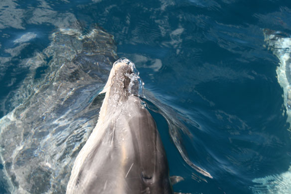 Dolphin Shows Gratitude to the Fishermen Who Rescued It ...