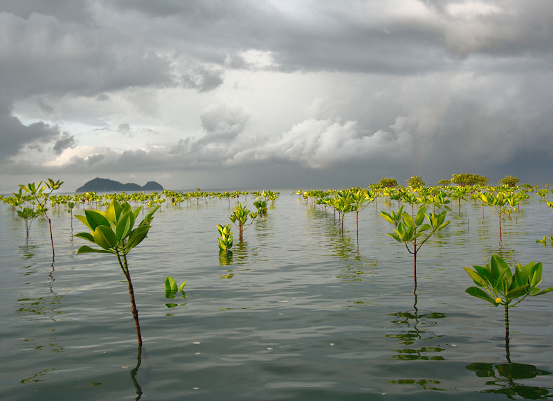 The World Must Invest In Mangroves