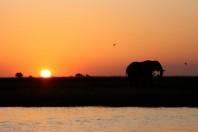 elephant-sun