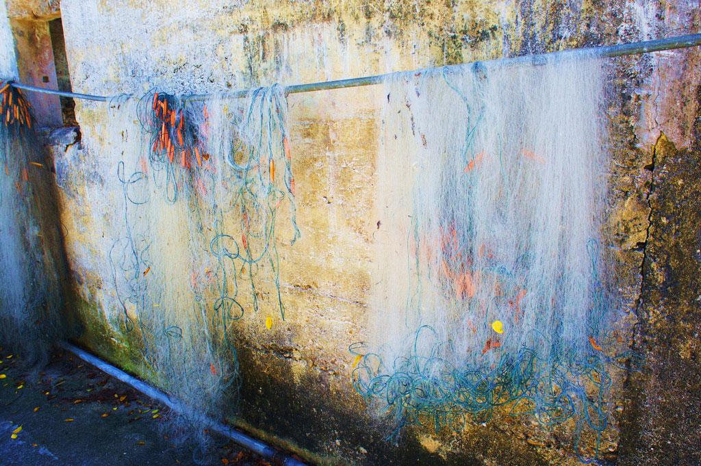 South Carolina's First Jellyfish Operation Raises Environmental Concerns