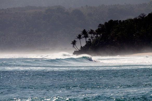 indonesia-coastal-forest