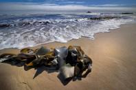 seaweed-australia