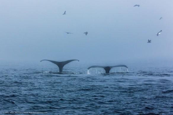 whales-california