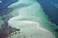 Sand Beaches Of The Northeast Coast Of Saudi Arabia; By Miles O. Hayes and Jacqueline Michel