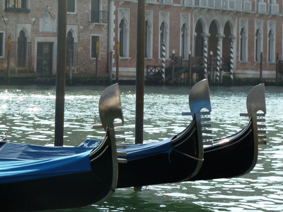 Venice: wildlife returns to tourist-free city