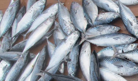 fish-coastal-care