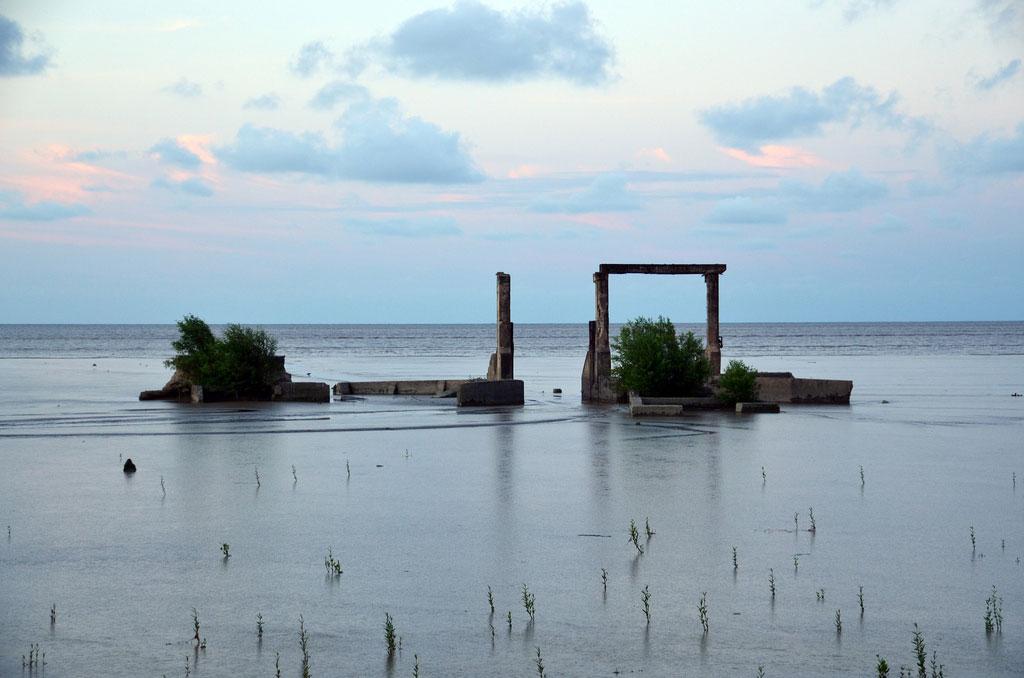 Mangroves Could Be Saviour of Guyana's Shrinking Coastline