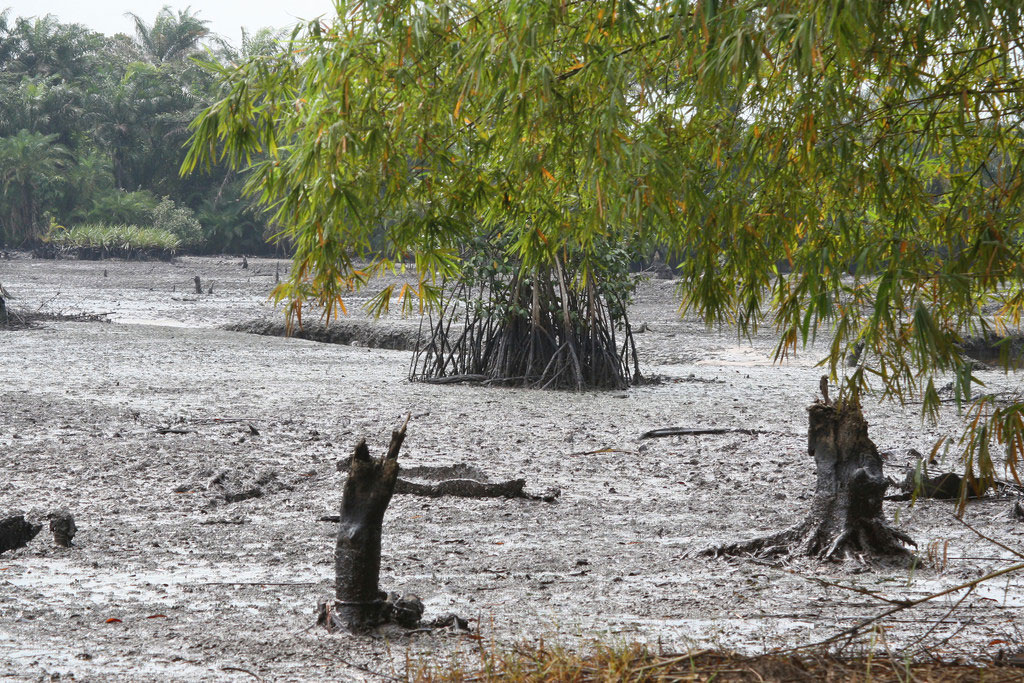 Niger delta oil spill clean-up launched – but could take quarter of a century